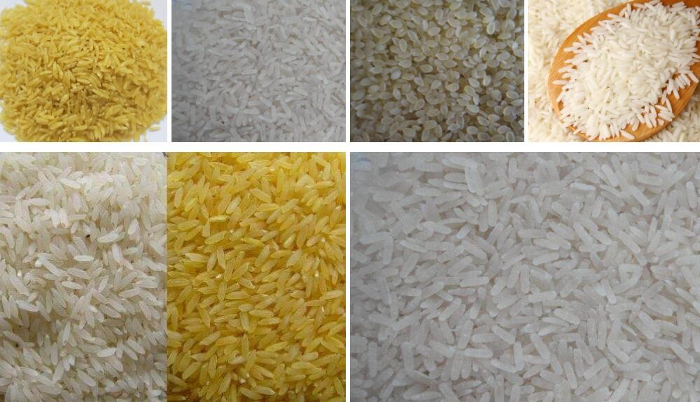 nutrition rice